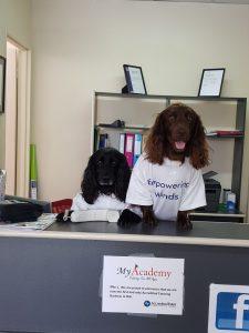 Dogs at admin desk